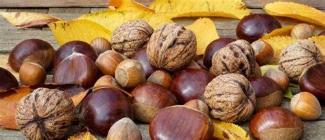 cuisiner les verts de poireaux recettes d 39 automne idées de recettes à base d 39 automne