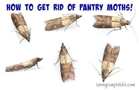 rid  pantry moths pantry moths moth moths