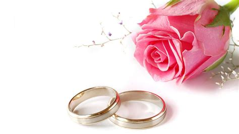 pink rose flower wedding rings love desktop hd wallpaper background  wallpaperscom