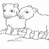 Coloring Muskox Ox Musk Designlooter Throughout Babies sketch template