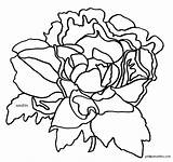 Indiana Peony Flower Coloring State Clip Clipart States sketch template