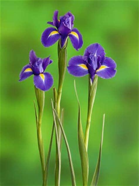 croatian flowers croatia state symbols song flags and more worldatlas com