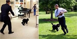 Barack Obama and all his family is a real dog lover