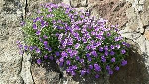 Blumen Für Steingarten : steingarten blumen winterhart garten design ideen um ihr zuhause zu versch nern ~ Sanjose-hotels-ca.com Haus und Dekorationen