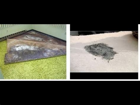 How To Shoo A Rug by How To Kill Mold In Carpet Review