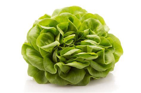cuisiner la salade verte comment conserver de la salade verte