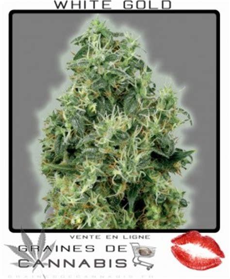 meilleur rendement cannabis interieur graines de cannabis f 233 minis 233 es avec un rendement 233 norme