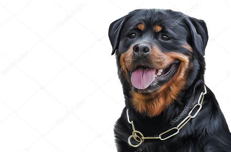 The Gallery For --> Rottweiler Drawing