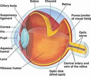 The World Through Our Senses  Sense Of Sight