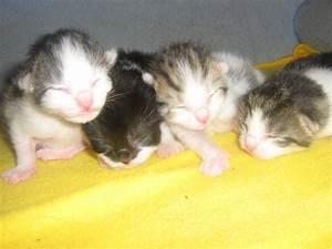 Mit Katze Umziehen : tieranzeigen hauskatzen kleinanzeigen ~ Michelbontemps.com Haus und Dekorationen