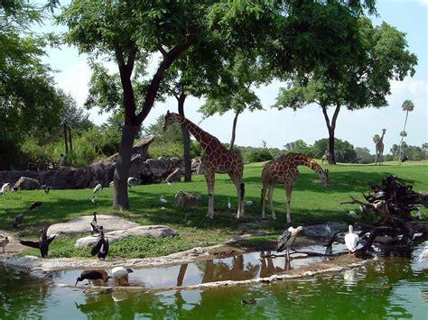 Edge-of-africa-giraffes.jpg
