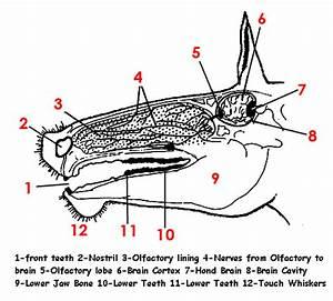 Anatomia Del Cavall