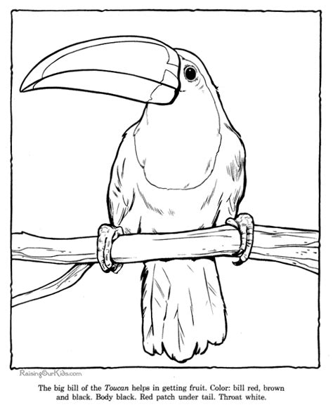 rainforest coloring pages toucan coloring picture