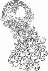 Coloring Pages Peacock Printable Paisley Adults Mandala Sheets Peacocks Animal Flower Sketchite sketch template