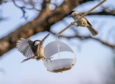 birdfreeder flat pack bird feeder design competitions