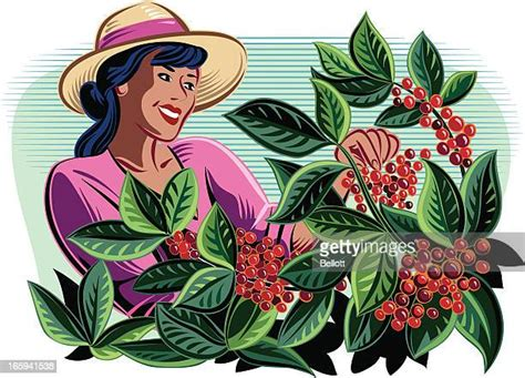 Choose from over a million free vectors, clipart graphics, vector art images, design templates, and illustrations created by artists worldwide! Harvesting Stock Illustrations And Cartoons | Getty Images