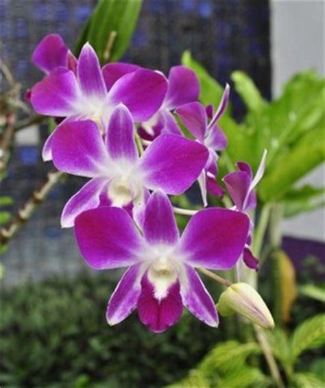pics of flowering plants flowering plants types of flowering plants biology tutorvista com