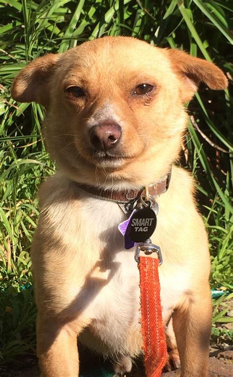 chapo rocket dog rescue