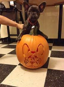 Pumpkin Carving With A Drill Pinterest by 50 Creative Pumpkin Carving Ideas Brit Co