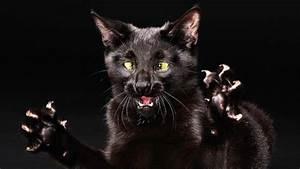 Full HD Wallpaper dark evil cat claw, Desktop Backgrounds ...
