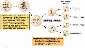 BIOL2060: Sexual Reproduction, Meiosis and Genetic ...