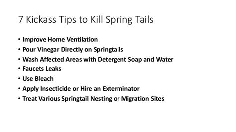 how to get rid of springtails at home