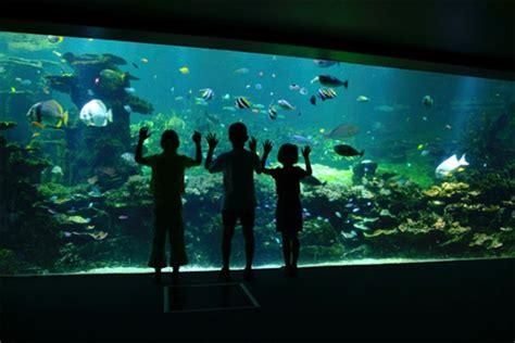 aquarium boulogne sur mer tarif aquarium de boulogne sur mer tarif 28 images the world