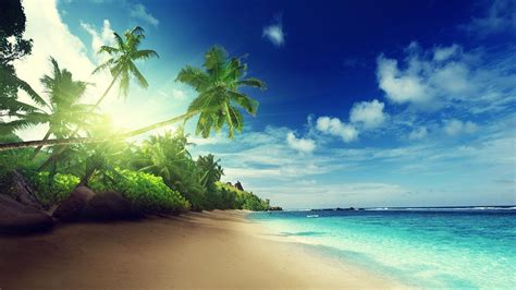 beach wallpaper    cool funny