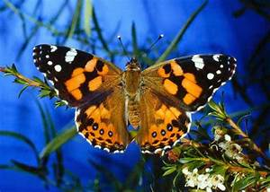 7 of the Most Colorful Butterfly Species | Fun Animals ...
