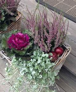 Planter Des Choux Fleurs : fleurs d 39 automne 6 propositions exquises pour votre d co deco exterieure pinterest ~ Melissatoandfro.com Idées de Décoration