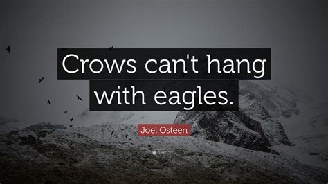 joel osteen quote crows  hang  eagles