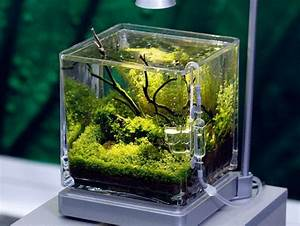 Petit Aquarium Design : nano tanks would love to set one up with a few black neon ~ Melissatoandfro.com Idées de Décoration