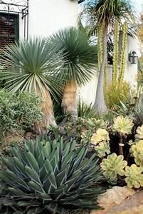 Yucca Palme Garten : palmlilie eine bezaubernde zier und nutzpflanze yucca ~ Lizthompson.info Haus und Dekorationen