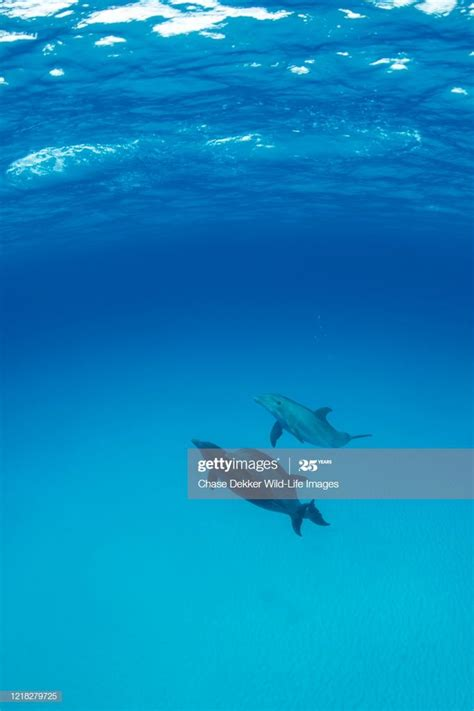 bottlenose dolphins photography ad sponsored