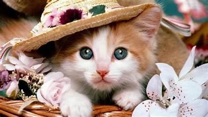 Kucing Lucu Imut Dan Menarik Kumpulan