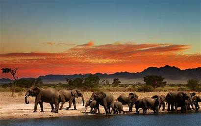 4k Africa South Elephants Wildlife African Wallpapers
