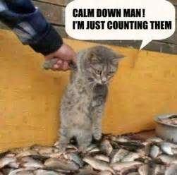cat jokes for cat humor page 47 forums at psych central