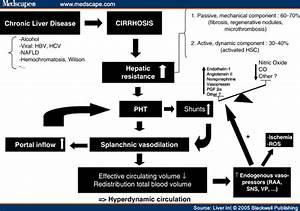 Portal Hypertension Pathophysiology