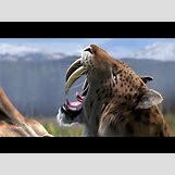Prehistoric Predators Bear Dog | 480 x 360 jpeg 29kB