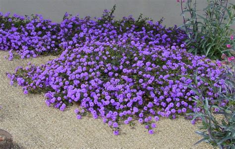 whole year flowering plants attract butterflies with colorful lantana birds and blooms