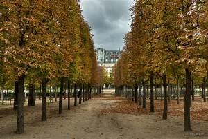Allee De Jardin : all e centrale jardin des tuileries paris france ~ Premium-room.com Idées de Décoration