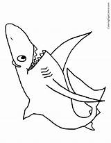Shark Coloring sketch template