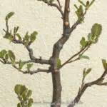 Bonsai Arten Für Anfänger : 5 tipps f r bl ten bonsai ~ Sanjose-hotels-ca.com Haus und Dekorationen