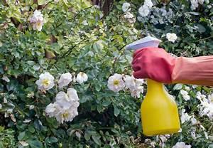 Garten Schädlinge Bekämpfen : rosen pflanzen und pflegen mit obi ~ Michelbontemps.com Haus und Dekorationen