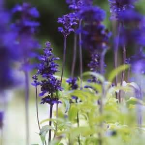 Muri fioriti con le erbacce perenni Giardinaggio Piante e Fiori