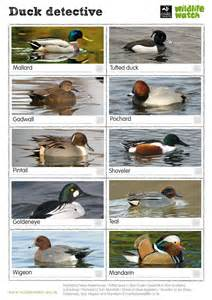 Christmas Tree Types Uk by Wildlife Spotter Sheets A To Z Surrey Wildlife Trust