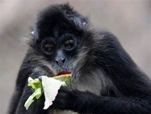 Consumption threat to vulnerable species: study