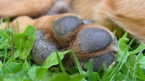 Hundeflöhe Was Hilft by Milben Beim Hund Was Hilft Tiergesund De