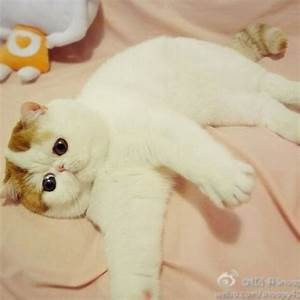 22 best The cutest cat in the world images on Pinterest ...