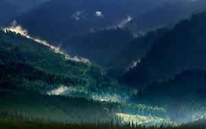 Landscape, Nature, Carpathians, Mountain, Mist, Forest
